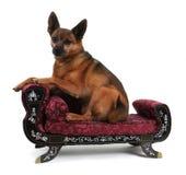 Rustende hond royalty-vrije stock afbeeldingen