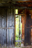 Rustic Abandoned Cabin With Aspen Tree in Doorway. Rustic historic cabin. Aspen tree visible through doorway. Good texture in wood. 1800's era Stock Image