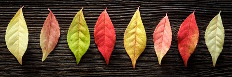 Rustic Autumn Banner royalty free stock photo