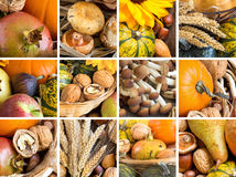 Rustic autumn collage: fruits, cereals and vegetables. On the wooden table Royalty Free Stock Photos