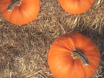 Rustic Fall Pumpkins and Hay Background From Directly Above. Rustic Autumn Orange Pumpkins Over Hay Background From Directly Above Royalty Free Stock Photos
