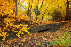 Rustic Autumn Scene. Bigtooth Maple grove with old stone wall in Millcreek Canyon, Salt Lake City area, Utah. October autumn leaves Stock Photography
