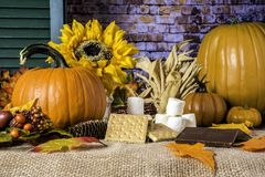 Rustic Autumn Scene with Pumpkins and Sunflower. Fall scene with graham crackers chocolate marshmallows for smores orange pumpkins yellow sunflower autumn leaves royalty free stock photography