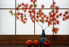 Rustic autumn scene of red Japanese maple leaves and ripe persimmons in front of a rice paper window background Royalty Free Stock Photography