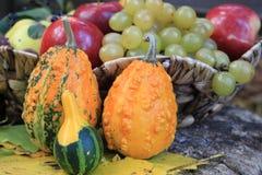 Rustic autumn still life with mini pumpkins Stock Image