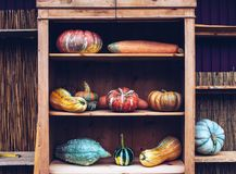 Autumn still life with organic pumpkins. Royalty Free Stock Image