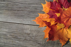 Rustic autumn theme with colorful maple leaves. Rustic autumn theme as a background with colorful maple leaves on weathered wooden planks Stock Photo