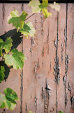Rustic background with grapevine Stock Photo