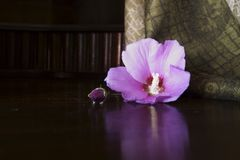 Rustic background with pink hibiscus flower Stock Photos