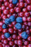 Rustic background with red tasty colorful cranberries and blueberries, top view. Soft focus, closeup photo of berries mix for eco Stock Photo
