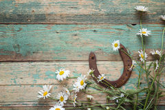 Rustic background with rusty horseshoe and daisies on old wooden Royalty Free Stock Photo