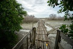 Rustic bamboo bridge near Benoa harbours Bali. It is not connect to anywhere, just a place for people who want fishing royalty free stock photo
