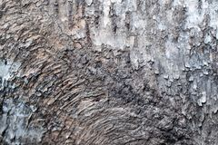 Rustic bark tree Royalty Free Stock Image