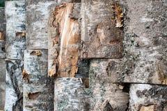 Rustic bark tree Royalty Free Stock Photo