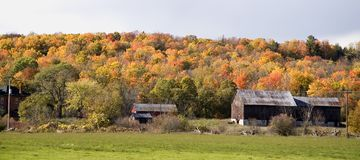 Rustic barn and fall colours. Rural autumn scene with brightly coloured foliage Stock Images