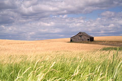 Rustic barn in a farm field. Stock Photography