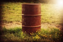 Rustic Barrel. In field with yellow flowers Stock Images