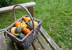 Rustic basket filled with a selection of ornamental gourds Royalty Free Stock Photo
