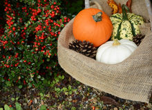 Rustic basket with orange pumpkin and colourful gourds Stock Image