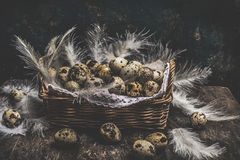 Rustic Basket with quail eggs and feathers on dark wooden stock images