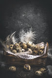 Rustic Basket with quail eggs and feathers on dark wooden background Stock Photography