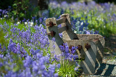 Rustic Bench. Rustic countryside bench amongst flowering bluebells in summer Stock Photos