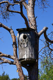 Rustic Bird House on Tree. A rustic bird house in a pine tree on a sunny day Royalty Free Stock Photos