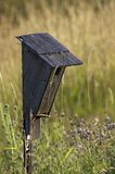 Rustic Blue Bird House in Early Morning Light. Worn and weathered blue bird house in prairie grasses - early morning light stock photography