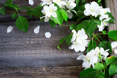 Rustic boards background with branches of flowering apple trees. Stock Images