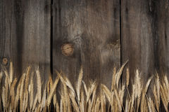 Rustic Boards Wheat Background. Old weathered boards with knots and rusted nails with golden wheat bottom border Royalty Free Stock Photography