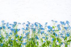 Rustic Border of blue forget-me-not flowers on white background Royalty Free Stock Photography