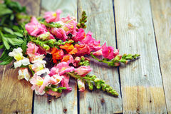 Rustic bouquet of snapdragon (Antirrhinum majus) on vintage wood Royalty Free Stock Photos