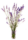 Rustic bunch of lavender in jam jar, isolated Stock Image