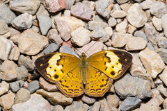 Rustic butterfly Stock Photography