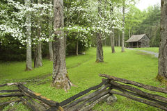 Rustic cabin in springtime Royalty Free Stock Photography