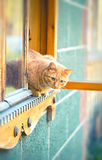 Rustic cat sitting behind a wooden house Stock Photo