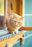 Rustic cat sitting behind a wooden house Royalty Free Stock Photo