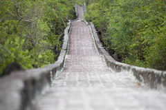 Rustic cobblestone path, access to Tortuga Beach, Galapagos. stock images