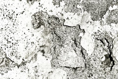 Rustic concrete wall Royalty Free Stock Image