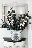 Rustic Cotton Stem and Eucalyptus Arrangement. Note to reviewer. Items are all generic. Old olive bucket filled with eucalyptus and cotton stem arrangement on a royalty free stock photo
