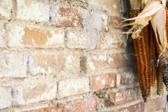Rustic country theme. Detail of brik wall with corncobs Stock Photos