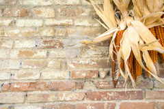 Rustic country theme. Detail of brik wall with corncobs Royalty Free Stock Photography