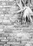 Rustic country theme. Detail of brik wall with corncobs (Black and White) Royalty Free Stock Photography