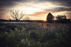 Rustic countryside landscape during sunrise at summer meadow with flowers and dramatic moody sky with clouds in vintage style Royalty Free Stock Photo