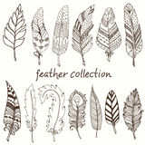 Rustic decorative feathers Royalty Free Stock Photography