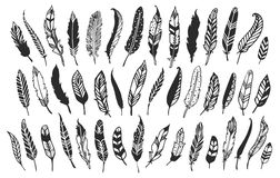 Rustic decorative feathers. Hand drawn vintage vector design. Set vector illustration