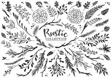 Rustic decorative plants and flowers collection. Hand drawn. Stock Photos
