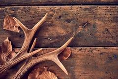 Rustic deer antlers and fallen brown leaves stock photos