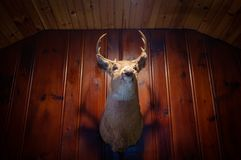 Rustic Deer Head. Rustic stuffed taxidermy deer head wall decoration royalty free stock photo