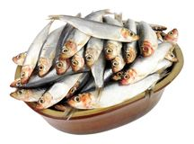 Rustic Dish Filled With Fresh Raw Fish. Sprats isolated on a white background Royalty Free Stock Photo